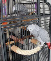 Papageien Freisitz SITZSTANGE Sisal SITZSEIL