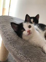 Junges Kätzchen 13 Wochen alt