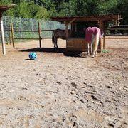 pferdeboxen frei in kleinem Privatstall