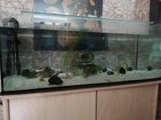 Axolotl Aquarium komplett Starterset