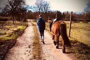 RB gesucht Reiterin sucht Pferd