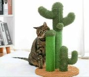 Kratzbaum Kaktus in Sand oder