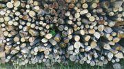 Brennholz Äste Buche trocken 5