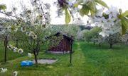 Garten Grundstück Wiese mit Hütte
