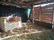 Haltergemeinschaft Platz Pony Shetty