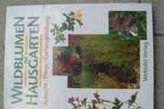 Wildblumen im Hausgarten