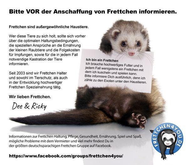 Frettchen Informationen Zur Haltung Und Ernahrung In Krefeld Kleintiere Kaufen Und Verkaufen Uber Private Kleinanzeigen