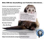 Frettchen - Informationen zur Haltung und