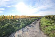 Suchen Grundstück Bauplatz in Mundelsheim