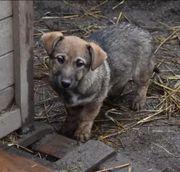 Esperanza nettes Hunde Welpen Mädchen