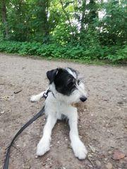 Max ca 9 Monate 55cm