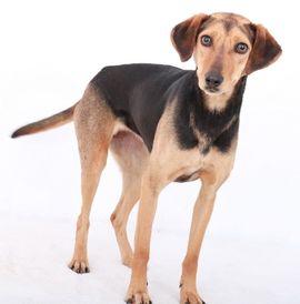 Hunde - Resi geb 08 2016 lebt