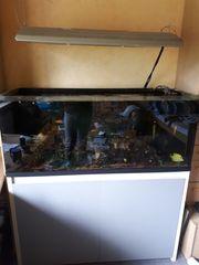 Salz-und Süßwasser Aquarium 300 l
