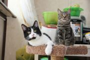Katzenkinder 6 Monate