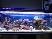 Meerwasseraquarium mit Besatz und Unterschrank
