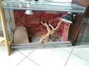 Glasterrarium LxBxH 100x50x70 cm