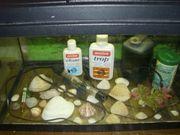 Aquarium mit Abdeckung Beleuchtung Filter