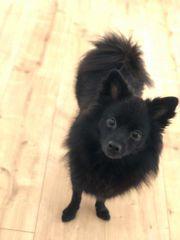 Hundemädchen Nora