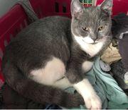 Mobile Katzenbetreuung für Esslingen Ostfildern