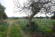 Gartengrundstück in Orosei Sardinien