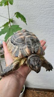 Schildkrötengruppe