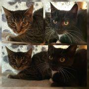 Baby Katze Kitten Lina und