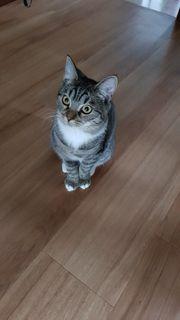 BKH Kitten komplett mit Zubehör