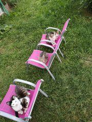 Wunderschöne Kätzchen abzugeben