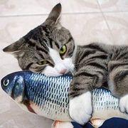 Katzengefährtin gesucht