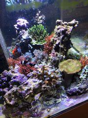 Meerwasser Aquarium kpl oder in