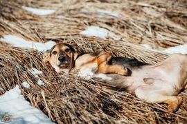 Hunde - Schäderhund-Bracke Mix Funtik sucht Zuhause