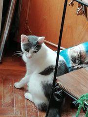 Notfall Katzen Kari und Mona