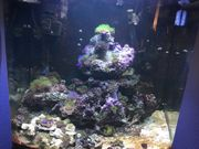 Meerwasseraquarium SeraMarin130l abzugeben