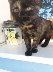 Katzenmädchen Clarice sucht ein Zuhause
