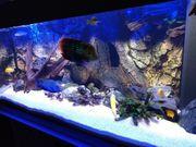Aquarium Juwel komplett