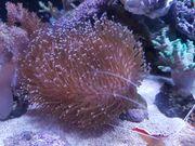 Meerwasser - Korallen günstig