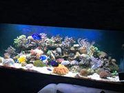 Meerwasseraquarium 920 Liter Inhalt