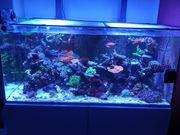 Reefer XL 425