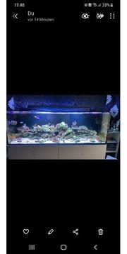 verkaufe red sea Reefer 900