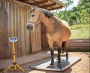 Pferdewaage Soleinhalation Magnetfeldtherapie