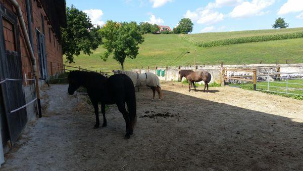 Offenstallplätze für Kleinpferde Ponys