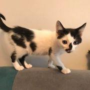 Kleines Kätzchen Dottie sucht Dich