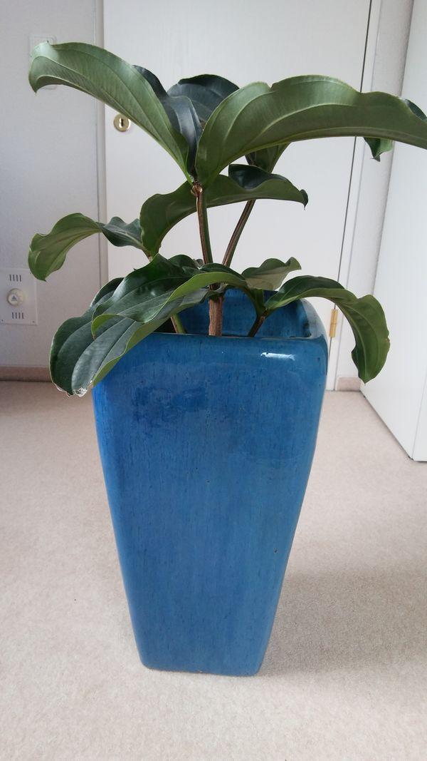 Pflanzenübertopf