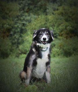 SARA - wäre glücklich als Einzelhund: Kleinanzeigen aus Rabenau - Rubrik Hunde