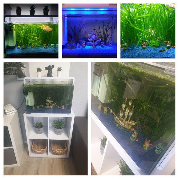 Aquarium 60l mit passendem Unterschrank