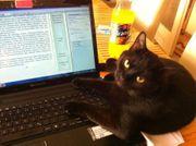 Studienassistentin mit tierischem Gehilfe sucht
