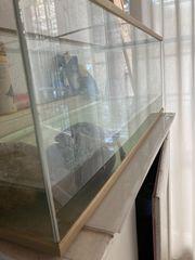Schildkröte mit Terrarium 120l