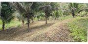 Brasilien 16Ha grosses Tiefpreis Grundstück