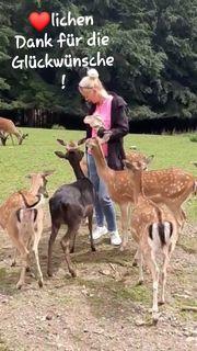 Haushaltshilfe Alltagshilfe Tierversorgung Pferdepflege