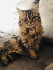 suche Kitten Kater für Bella